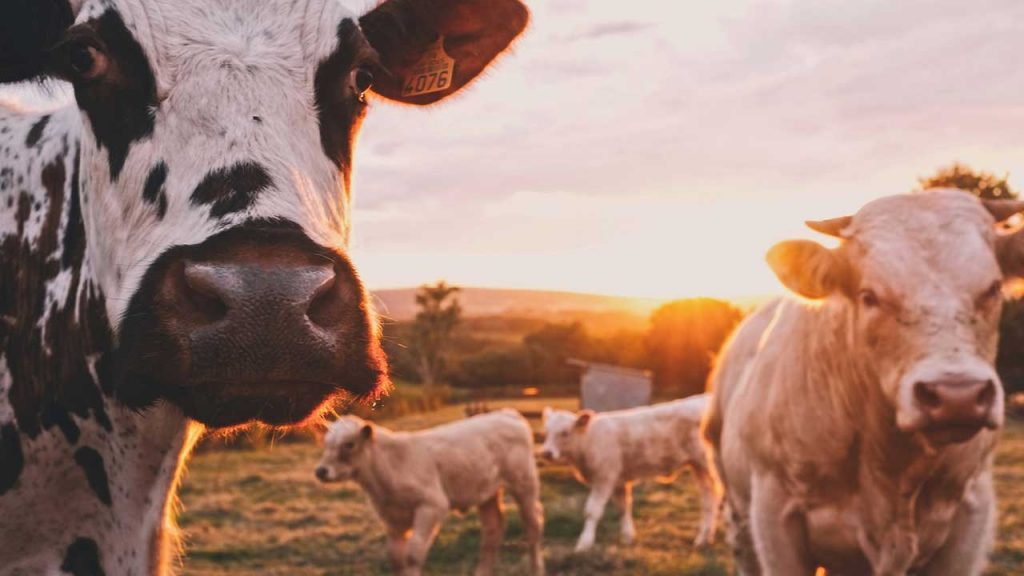 What Is Milk Run In Logistics?